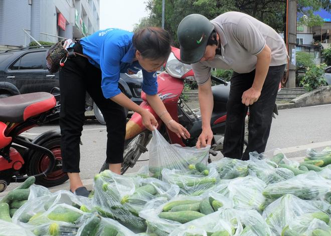 Hàng trăm kg dưa chuột đổ mồ hôi trong nắng nóng Hà Nội chờ được giải cứu - Ảnh 8.