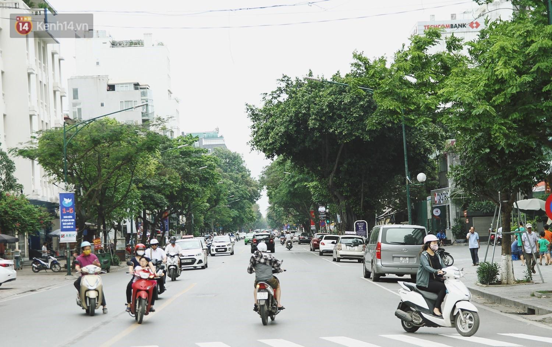 Người Hà Nội tiếc nuối hàng cây sưa quý hiếm chuẩn bị di dời để xây ga ngầm 1