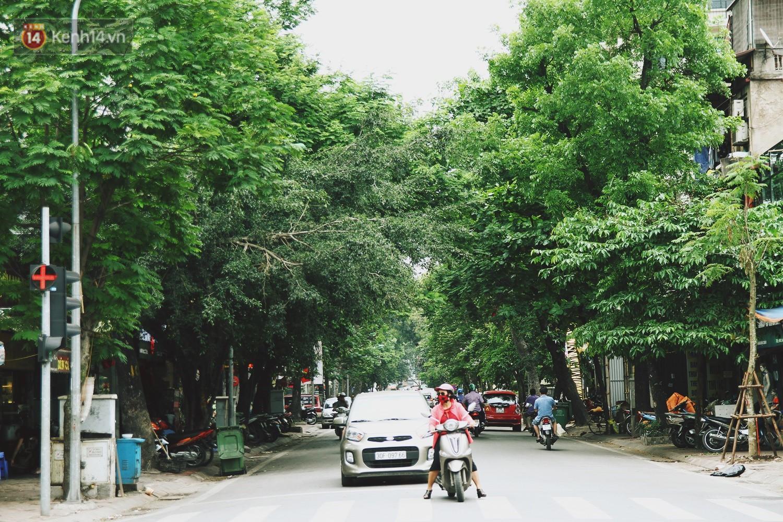 Người Hà Nội tiếc nuối hàng cây sưa quý hiếm chuẩn bị di dời để xây ga ngầm 2