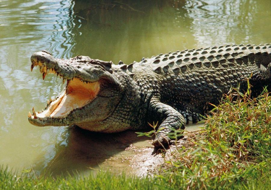 Bị cá sấu cắn đứt một cánh tay, cô gái vẫn quyết tâm làm đám cưới đúng ngày dù phải băng tay hành lễ 1