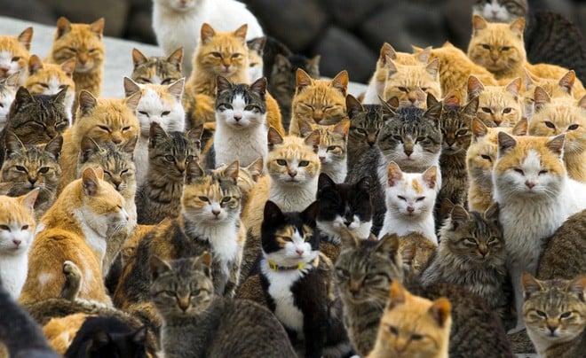 Ở Nhật, có 1 hòn đảo chỉ rộng 1,4km nhưng lại được mệnh danh là 'Thiên đường của loài mèo' 3