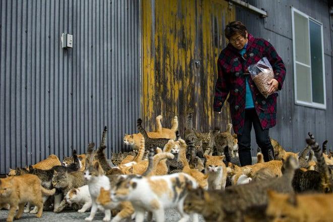 Ở Nhật, có 1 hòn đảo chỉ rộng 1,4km nhưng lại được mệnh danh là 'Thiên đường của loài mèo' 8