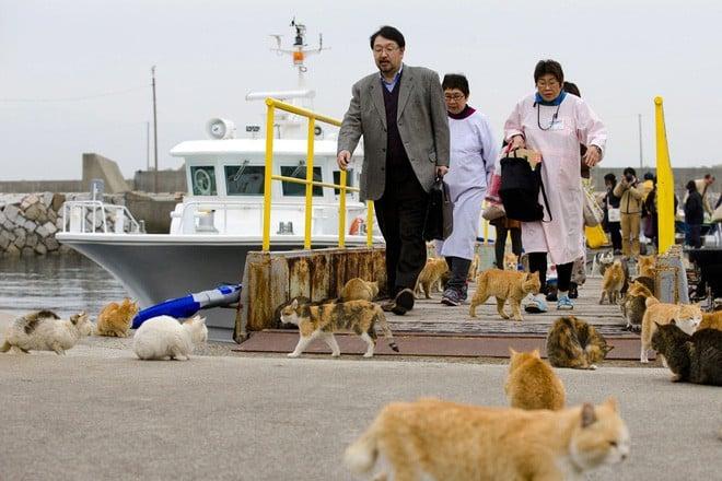 Ở Nhật, có 1 hòn đảo chỉ rộng 1,4km nhưng lại được mệnh danh là 'Thiên đường của loài mèo' 9