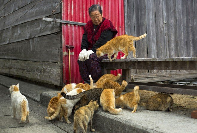 Ở Nhật, có 1 hòn đảo chỉ rộng 1,4km nhưng lại được mệnh danh là Thiên đường của loài mèo - Ảnh 11.