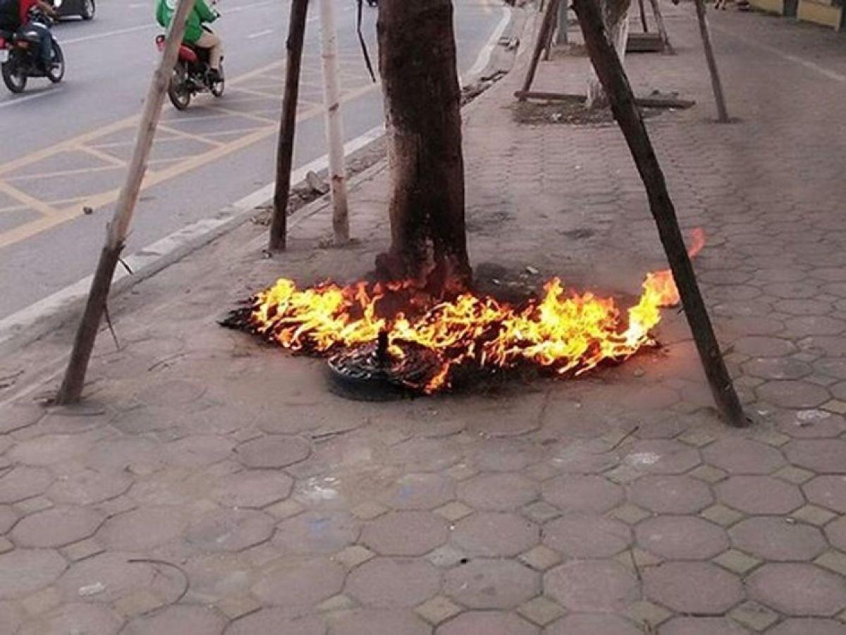 Hà Nội: Khẩn trương điều tra vụ hủy hoại cây xanh trên đường Võ Chí Công 1