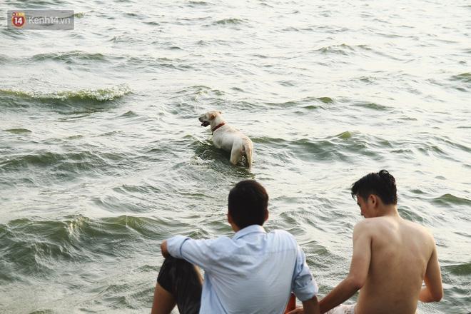 Hình ảnh Nắng nóng oi bức, người dân Thủ đô bế chó cưng ra Hồ Tây cùng tắm để giải nhiệt dù có biển cấm số 9