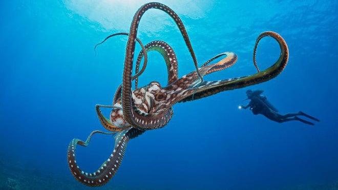 Phát hiện không ngờ về bạch tuộc - đến Trái đất nhờ sao Chổi và là sinh vật ngoài hành tinh? - Ảnh 3.