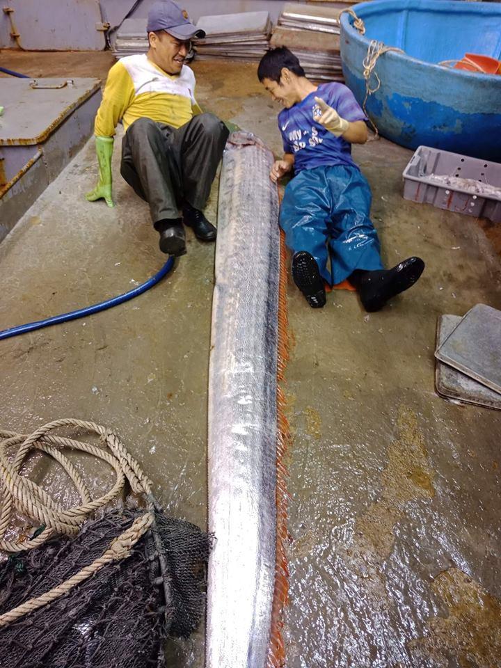 Thanh Hoá: Ngư dân bắt được cá hố rồng khổng lồ nặng gần 1 tạ, 4 người mới nhấc lên nổi 3