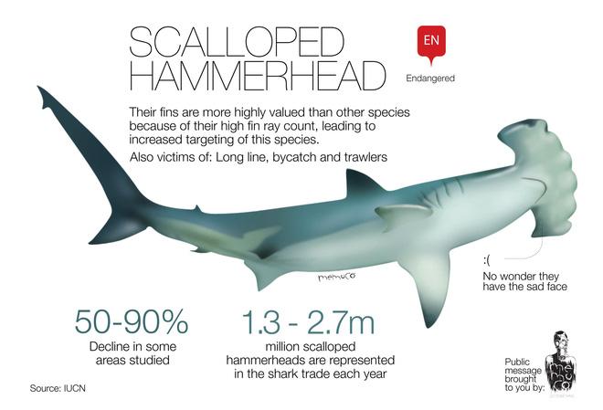 Phát hiện cá mập trên miệng núi lửa nhưng không ai lý giải nổi vì sao chúng lên được đó 2