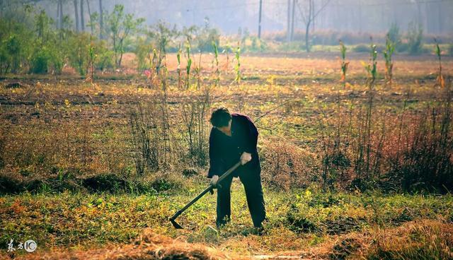 Chạm trán nhện độc, người nông dân bất ngờ khiến con vật chết thảm dưới bàn chân đầy bùn 1