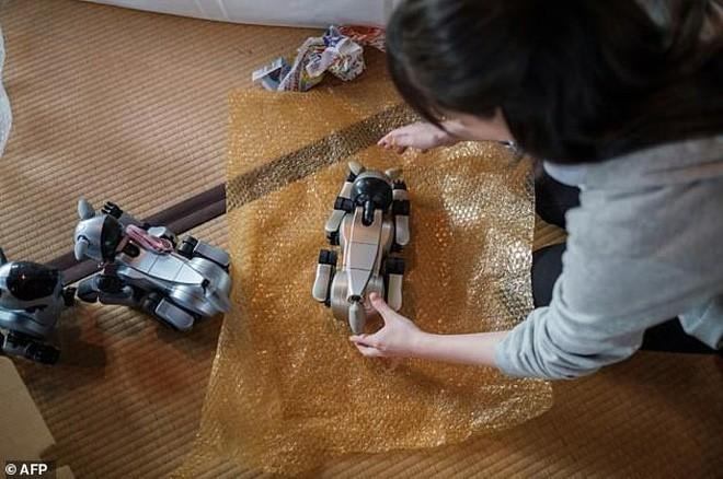Kỳ lạ ngôi chùa Nhật Bản làm đám tang cho chó robot: máy móc cũng có linh hồn 3