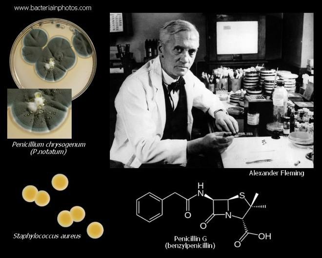 Công bố sự thật về bệnh nhân đầu tiên sử dụng kháng sinh penicillin - Ảnh 1.