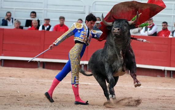 Bò tót thật ra chẳng ghét màu đỏ như ta lầm tưởng, chúng nổi điên tấn công dũng sĩ đấu bò hóa ra là vì điều này 2