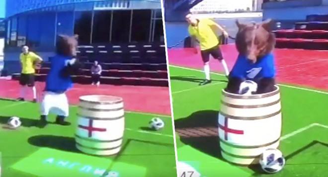 Dùng gấu để dự đoán kết quả World Cup 2018, chương trình truyền hình Nga khiến cộng đồng mạng phẫn nộ 2