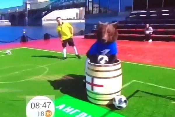 Dùng gấu để dự đoán kết quả World Cup 2018, chương trình truyền hình Nga khiến cộng đồng mạng phẫn nộ 3