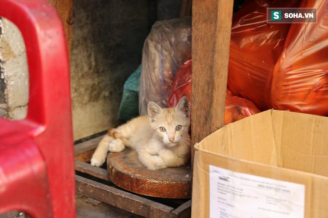 Cụ già bán chuối chiên nuôi chồng bại liệt ở Sài Gòn: 'Có ít tiền thì sống theo cách của người ít tiền' 7