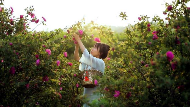 Cuộc sống đẹp như trong mơ với khu vườn không khác gì cổ tích của cô gái trẻ vừa xinh đẹp lại vô cùng đa tài 7