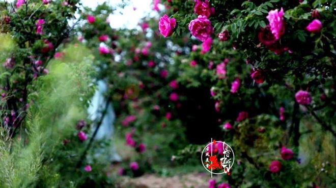 Cuộc sống đẹp như trong mơ với khu vườn không khác gì cổ tích của cô gái trẻ vừa xinh đẹp lại vô cùng đa tài 20