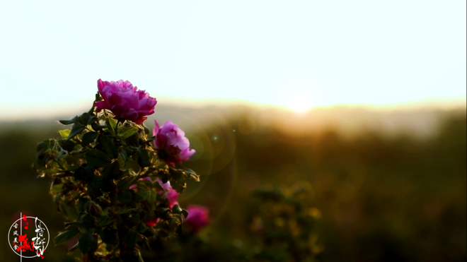 Cuộc sống đẹp như trong mơ với khu vườn không khác gì cổ tích của cô gái trẻ vừa xinh đẹp lại vô cùng đa tài 22