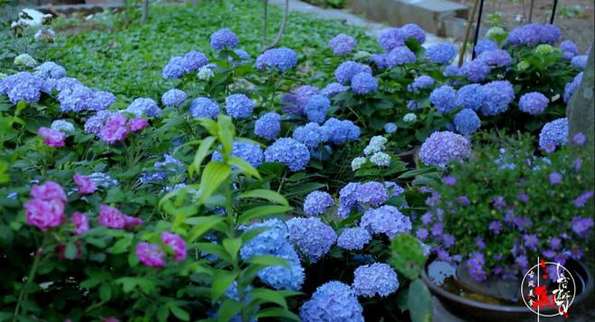 Cuộc sống đẹp như trong mơ với khu vườn không khác gì cổ tích của cô gái trẻ vừa xinh đẹp lại vô cùng đa tài 24