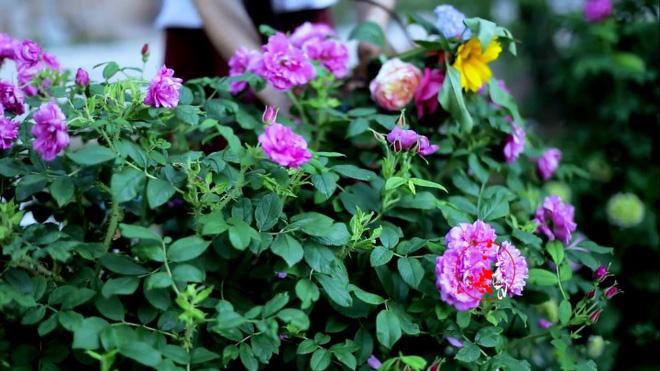 Cuộc sống đẹp như trong mơ với khu vườn không khác gì cổ tích của cô gái trẻ vừa xinh đẹp lại vô cùng đa tài 28