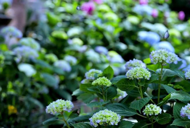 Cuộc sống đẹp như trong mơ với khu vườn không khác gì cổ tích của cô gái trẻ vừa xinh đẹp lại vô cùng đa tài 29
