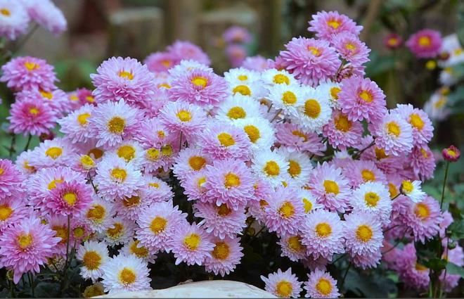 Cuộc sống đẹp như trong mơ với khu vườn không khác gì cổ tích của cô gái trẻ vừa xinh đẹp lại vô cùng đa tài 32
