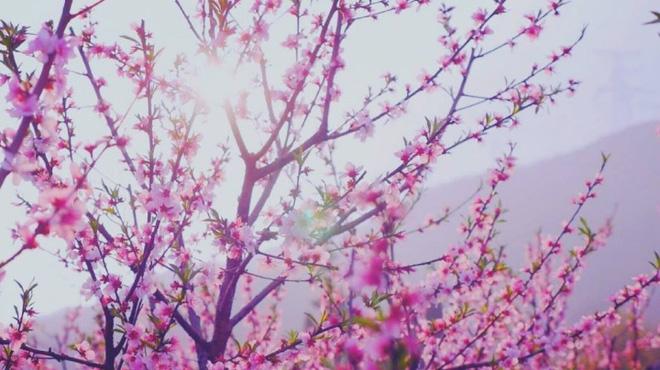 Cuộc sống đẹp như trong mơ với khu vườn không khác gì cổ tích của cô gái trẻ vừa xinh đẹp lại vô cùng đa tài 34