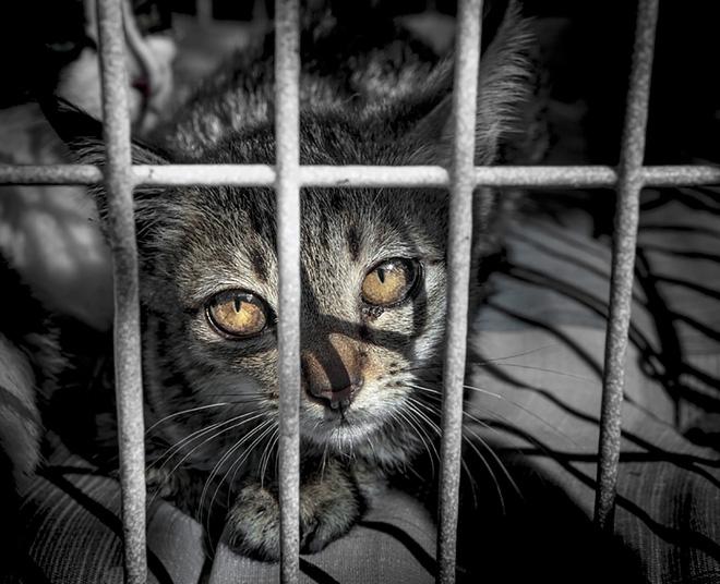 Chuyện ở những đất nước mà chó mèo có hai số phận: Được cưng chiều hết mực, hoặc oặt mình trong lồng cũi tới bàn tiệc 5