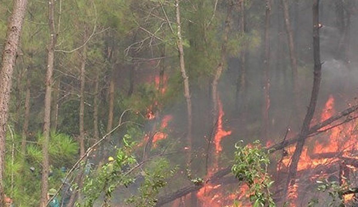 Người đàn ông tử vong thương tâm khi lên núi dập lửa ở Nghệ An 1
