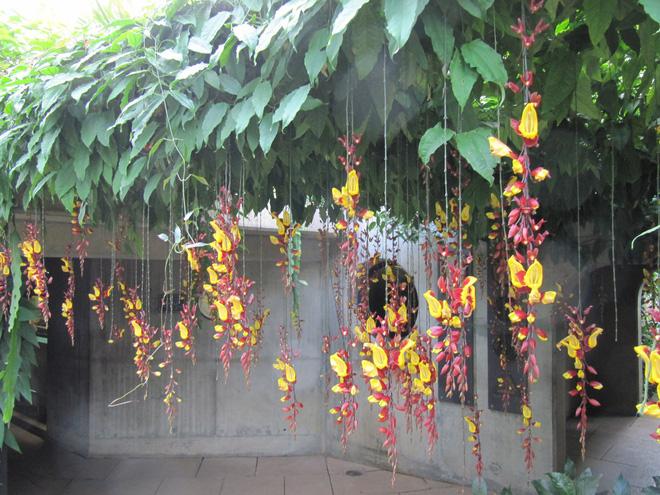 Trồng 7 loại cây có hoa này để ngôi nhà mát lịm trong những ngày nóng như đổ lửa - Ảnh 11.