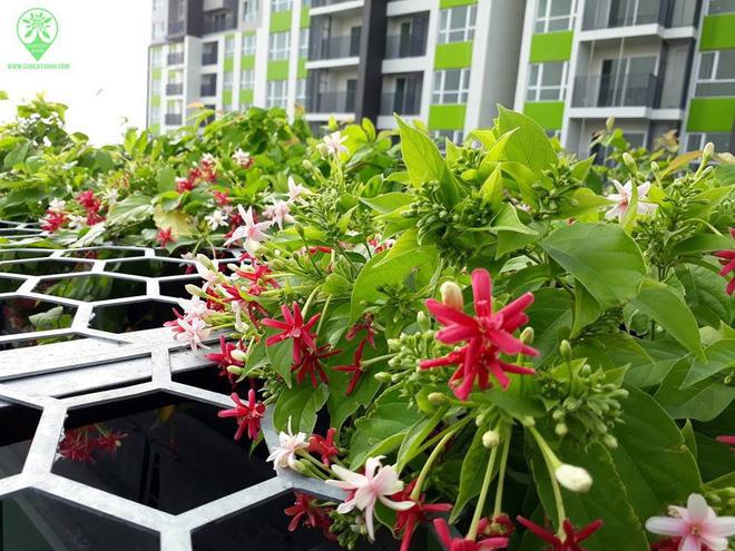 Trồng 7 loại cây có hoa này để ngôi nhà mát lịm trong những ngày nóng như đổ lửa - Ảnh 14.