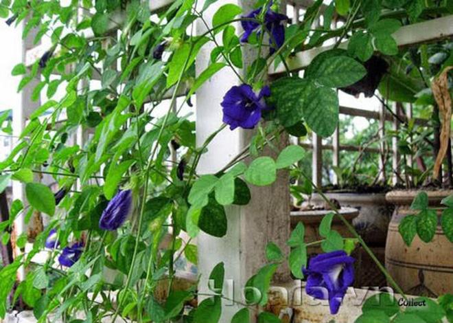 Trồng 7 loại cây có hoa này để ngôi nhà mát lịm trong những ngày nóng như đổ lửa - Ảnh 17.