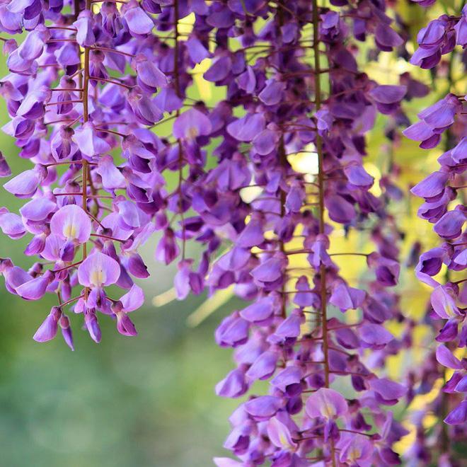 Trồng 7 loại cây có hoa này để ngôi nhà mát lịm trong những ngày nóng như đổ lửa - Ảnh 5.