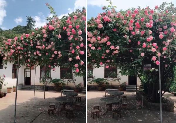 Trồng 7 loại cây có hoa này để ngôi nhà mát lịm trong những ngày nóng như đổ lửa - Ảnh 10.