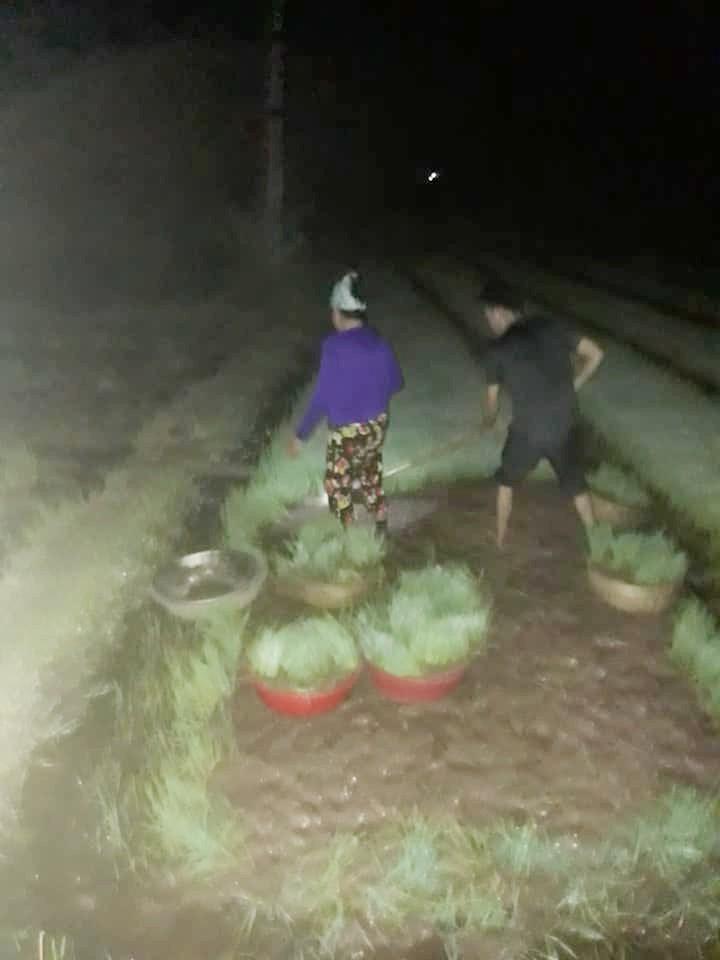 Nhìn cảnh các mẹ lọ mọ rọi đèn đi cấy giữa đêm tránh cái nóng 40 độ này mới biết những bác nông dân vất vả thế nào 3