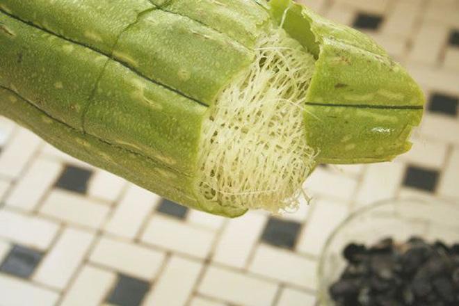 Không chỉ ngon mát, loại quả có nhiều ở Việt Nam này là vị thuốc quý thanh nhiệt, giải độc 1