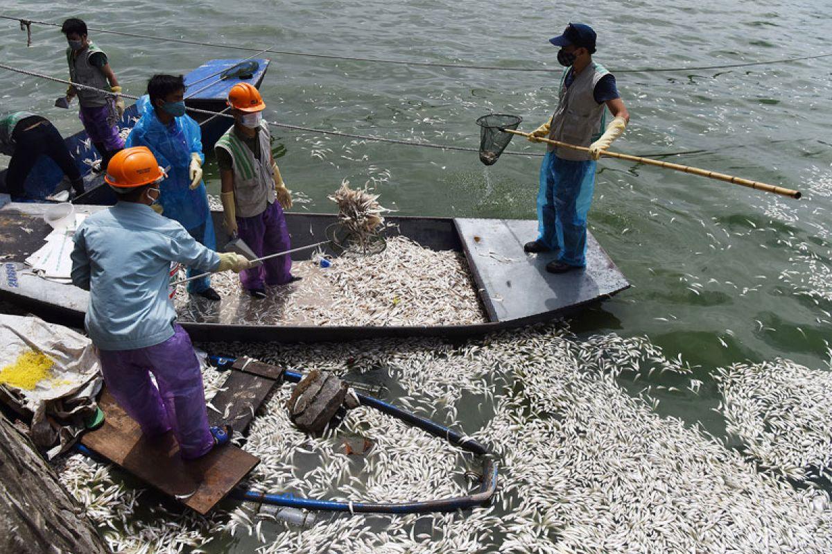 Cá chết trắng ở hồ Tây: Chủ tịch TP chỉ đạo sớm hoàn thành việc xử lý, không ảnh hưởng đến môi trường 1