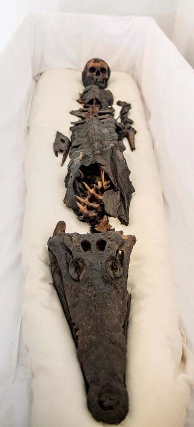 Hình ảnh Phát hiện xác ướp hai đầu kỳ lạ nhất thế giới: một đầu người, một đầu cá sấu số 1