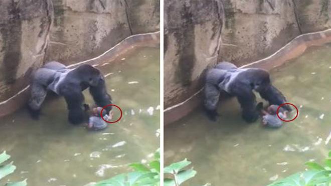 Trung Quốc: Cùng mẹ cho khỉ ăn ở vườn thú, bé gái bất ngờ bị con vật đấm vào mặt 2