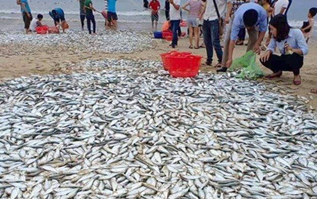 Hình ảnh Hơn 3 tấn cá bất ngờ dạt vào bờ, ngư dân bắt mỏi tay không hết số 2