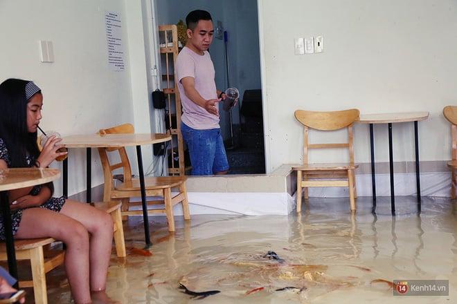 Hình ảnh Chủ quán cafe Sài Gòn cho khách cởi giày, ngâm chân dưới hồ cá: Có nội quy cho khách, chúng tôi còn cử 8 nhân viên túc trực 24/24 theo dõi cá số 14