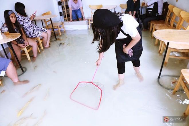 Hình ảnh Chủ quán cafe Sài Gòn cho khách cởi giày, ngâm chân dưới hồ cá: Có nội quy cho khách, chúng tôi còn cử 8 nhân viên túc trực 24/24 theo dõi cá số 15