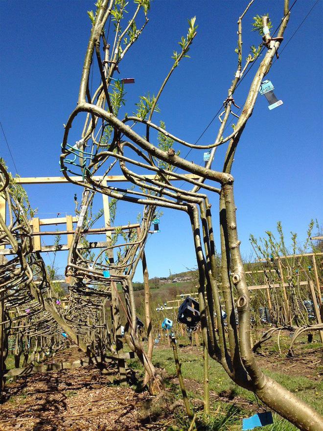 Người nông dân Anh tự tay trồng đồ nội thất: Từ hạt giống mọc lên bàn ghế, chụp đèn - Ảnh 1.