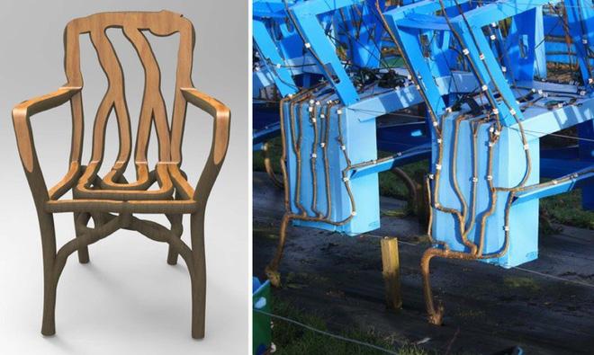 Người nông dân Anh tự tay trồng đồ nội thất: Từ hạt giống mọc lên bàn ghế, chụp đèn - Ảnh 2.