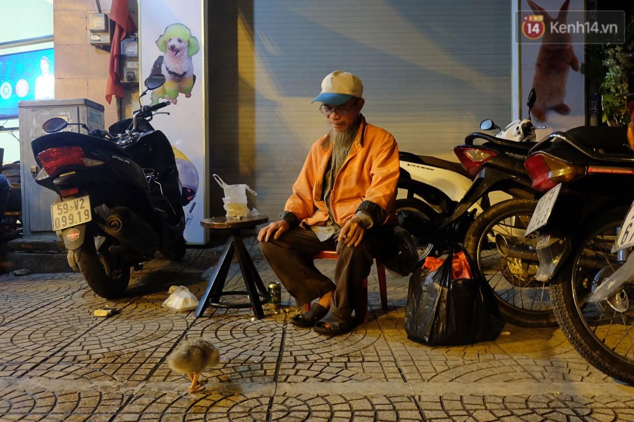 Câu chuyện đáng yêu về chú vịt con lon ton theo sau ông lão vé số ở Sài Gòn: