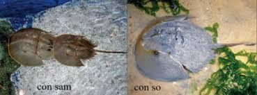 Ngộ độc chết người chỉ vì nhầm lẫn so biển với sam biển: Cách phân biệt chuẩn xác theo hướng dẫn của chuyên gia 1