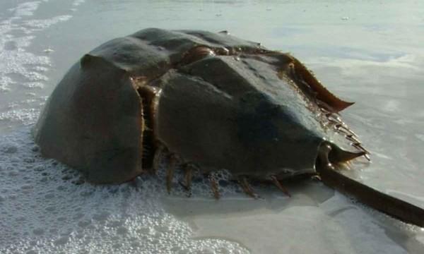 Ngộ độc chết người chỉ vì nhầm lẫn so biển với sam biển: Cách phân biệt chuẩn xác theo hướng dẫn của chuyên gia 2