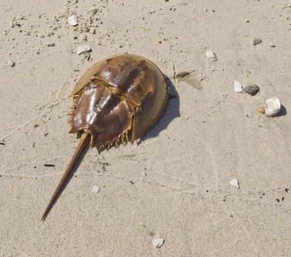 Ngộ độc chết người chỉ vì nhầm lẫn so biển với sam biển: Cách phân biệt chuẩn xác theo hướng dẫn của chuyên gia 4