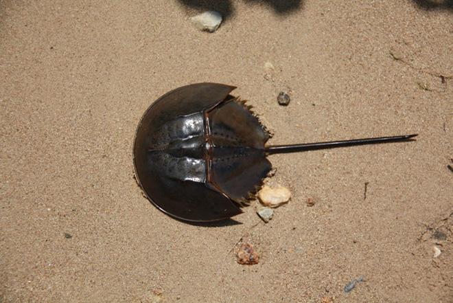 Ngộ độc chết người chỉ vì nhầm lẫn so biển với sam biển: Cách phân biệt chuẩn xác theo hướng dẫn của chuyên gia 5